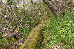 古老石渡槽在Los附近Realejos,特内里费岛,西班牙镇的杉木森林里  免版税库存照片