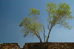 古老石结构树墙壁 免版税库存图片