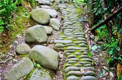 古老石道路在森林 免版税库存照片