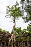 古老石建筑和树根, Ta Prohm寺庙废墟,吴哥,柬埔寨 免版税库存图片