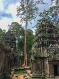古老石建筑和树根, Ta Prohm寺庙废墟,吴哥,柬埔寨 免版税图库摄影