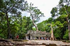 古老石建筑和树根, Ta Prohm寺庙废墟,吴哥,柬埔寨 库存照片