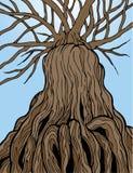 古老结构树 库存例证