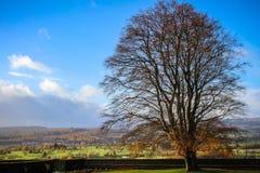 古老苏格兰树风景 免版税图库摄影