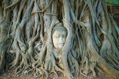 古老菩萨雕塑的头是向内生长的入树的根 市的标志阿尤特拉利夫雷斯,泰国 免版税库存照片