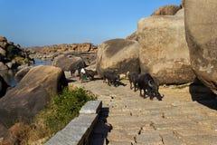 古老路在亨比,卡纳塔克邦,印度 库存图片