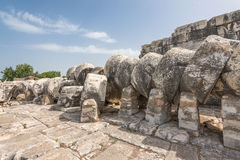 古老阿波罗寺庙的巨型专栏在Didyma,土耳其 库存照片