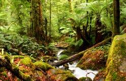 古老雨林 免版税图库摄影