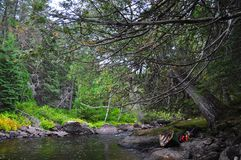 古老雪松Portage,一点Missinaibi河,安大略 免版税库存图片
