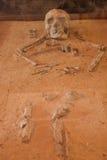 古老骨头 库存图片