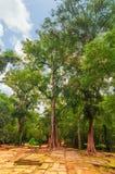 古老高棉建筑学在密林 在废墟Ta Prohm,一部分的树的高棉寺庙复合体,亚洲 柬埔寨收割siem 库存图片