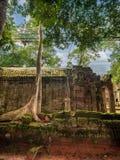古老高棉建筑学的重建在密林 免版税库存图片