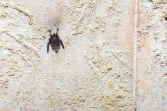 古老600年城堡在Tomar,葡萄牙 免版税库存图片