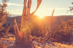古老结构树 免版税图库摄影