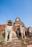 在Ayutthaya历史公园,泰国破坏狮子雕象 库存照片