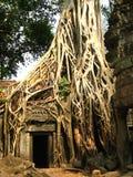 古老angkor大厦根废墟坐结构树 库存图片