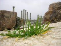 古老apamea城市叙利亚 库存照片