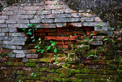 古老brickwall青苔老纹理 库存照片