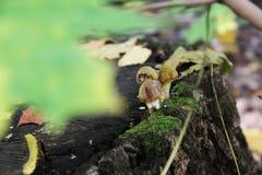 古老castleIn秋天的屋顶在树桩的,青苔种植蘑菇 库存图片