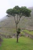 古老machu秘鲁picchu废墟 库存照片