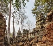 古老Ta Prohm寺庙,吴哥城,暹粒,柬埔寨 库存图片