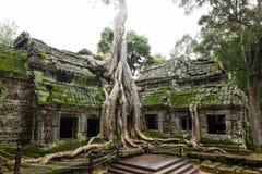 古老Ta Prohm寺庙 免版税库存图片