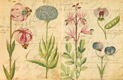 古色古香的植物的墙壁艺术印刷品例证 免版税库存照片
