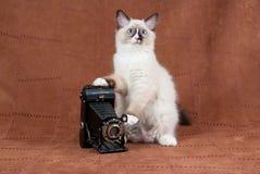 古色古香的照相机小猫绒面革 库存图片