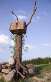 古色古香的胸口老结构树 库存照片
