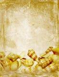 古色古香的贝壳纹理 免版税图库摄影