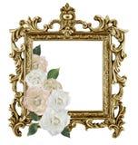 古色古香的金黄在白色backgr隔绝的框架白玫瑰 库存图片