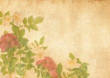 古色古香的织地不很细玫瑰 免版税库存照片