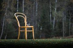 古色古香的Bentwood维也纳椅子 图库摄影