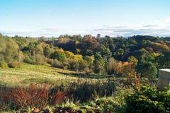古苏格兰森林细节 图库摄影
