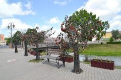 古谢夫,俄罗斯- 2015年6月04日:在堤防的幸福树 免版税图库摄影