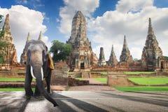 古迹旅游业在泰国 库存照片