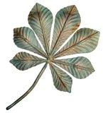 古铜色栗子叶子 向量例证