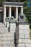 古铜色狮子和步,开普敦,南非 免版税图库摄影