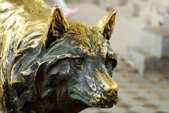 古铜色狼雕塑  库存图片