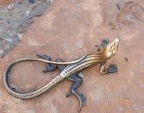 古铜色蜥蜴雕象在拱门国家公园访客中心 库存图片