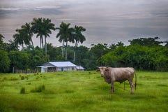 古巴乡下风景 免版税图库摄影