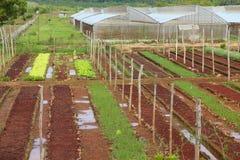 古巴农业 图库摄影