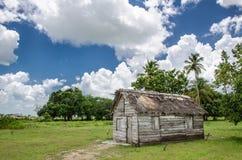 古巴农场 库存图片