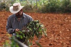 古巴农夫 库存图片