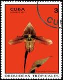 古巴-大约1971年:在古巴打印的邮票显示兰花杓兰callossum,系列兰花 免版税图库摄影