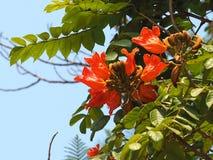 古巴的植被 免版税库存图片