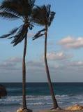 古巴的植被 库存照片