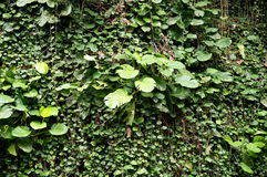 古巴的植被 库存图片
