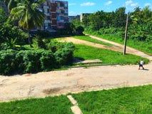 古巴自然 免版税库存图片