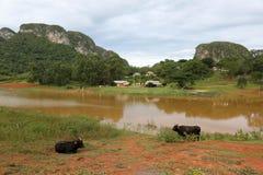 古巴,湖在Vinales 免版税库存图片